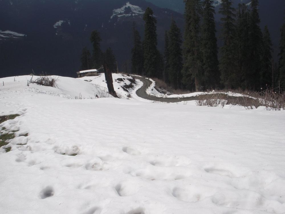 Sach Pass @ Dalhousie